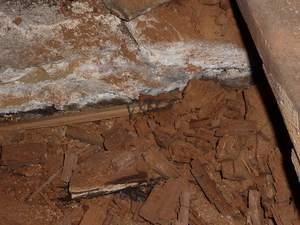 Parasite Champignons mérule