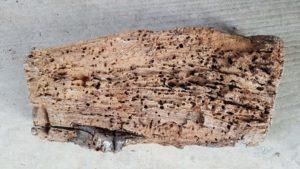 Parasite attaque bois grosse vrillette