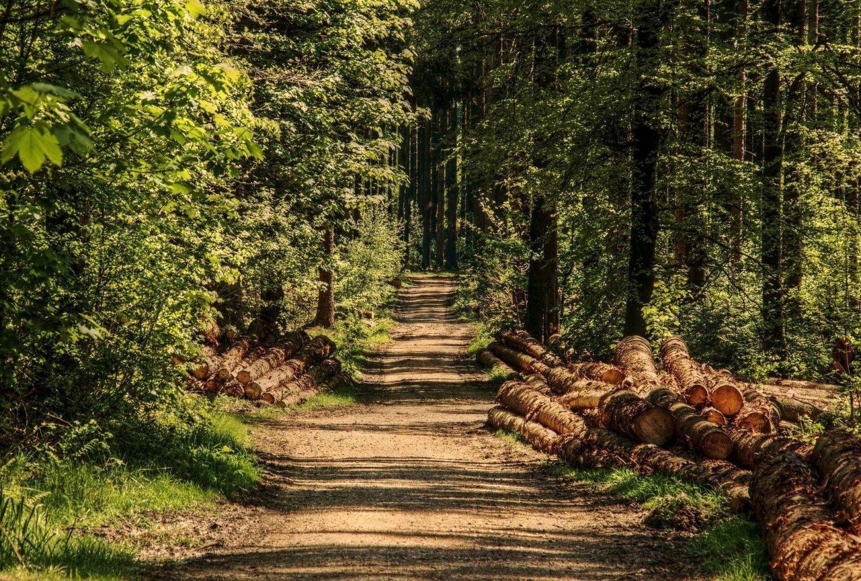 bois ressource naturelle