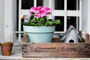entretien jardin maison